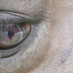 Eye of Horse: Umbria