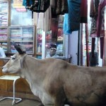 A Bull in a Silk Shop