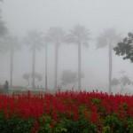 Lima in fog